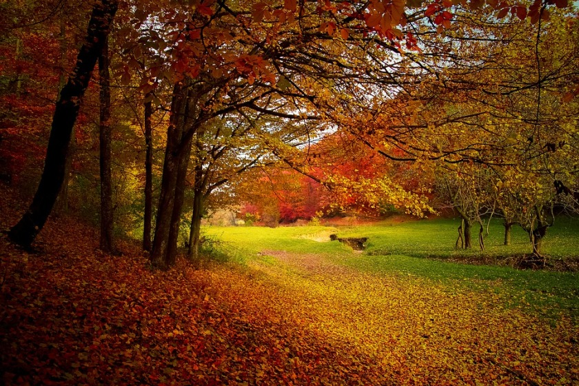 autumn-1072827_960_720